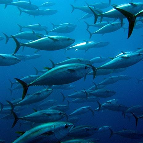 Nachhaltiger Fang
