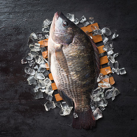 Fisch des Jahrtausends