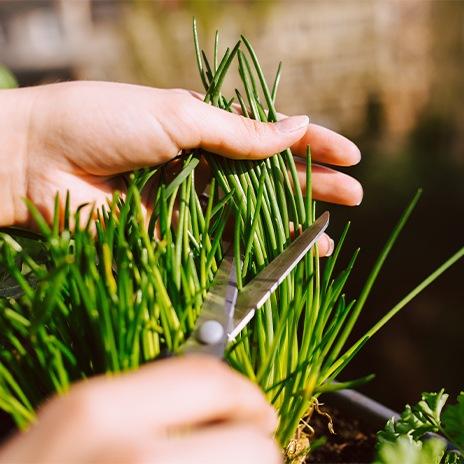 Richtige Pflege und Ernte