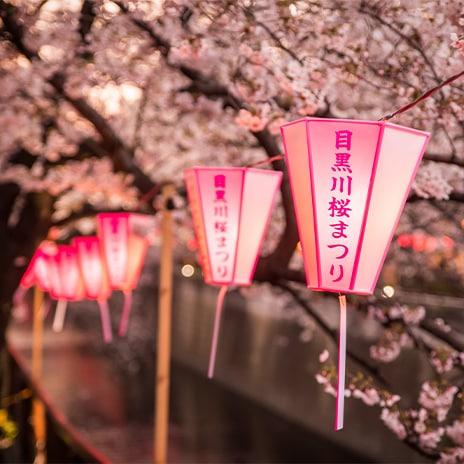 Japanisches Kirschblütenfest