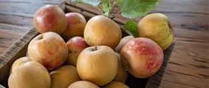 Boskoop Äpfel