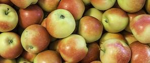Kanzi Äpfel