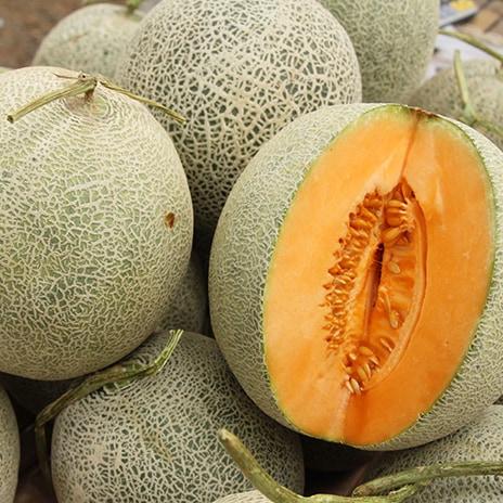 Zubereitung Melonen