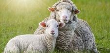 4 piliers METRO : bien-être animal