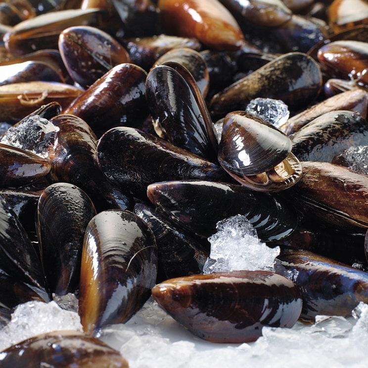 Coquillages et crustacés - La coquille Saint Jacques