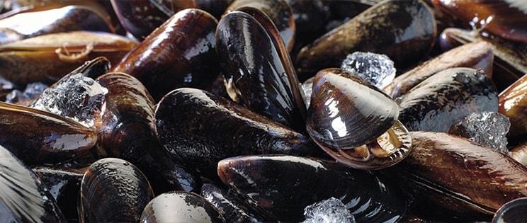 Les coquillages et crustacés - les moules