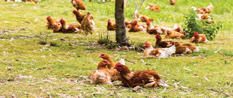 Les œufs alternatifs français
