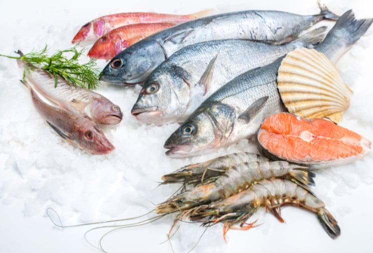 Fresh fish teaser