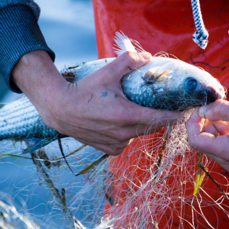 Bijela riba