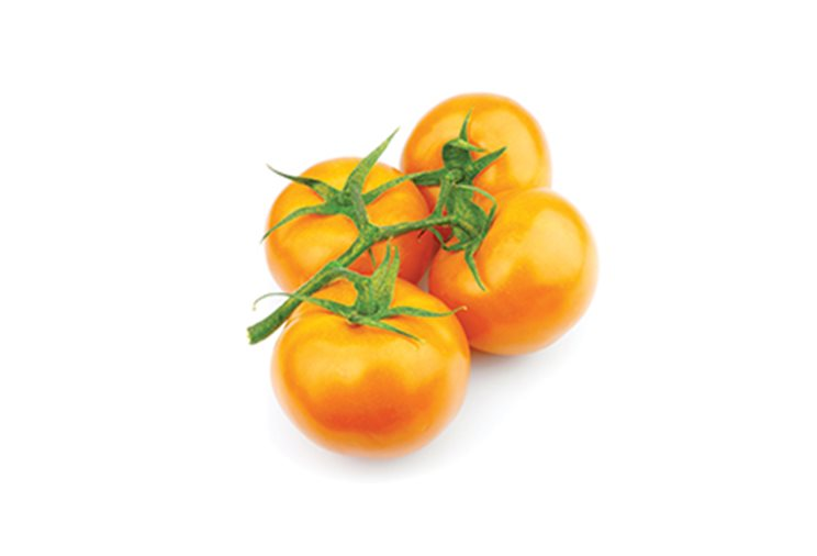 narancasta rajcica