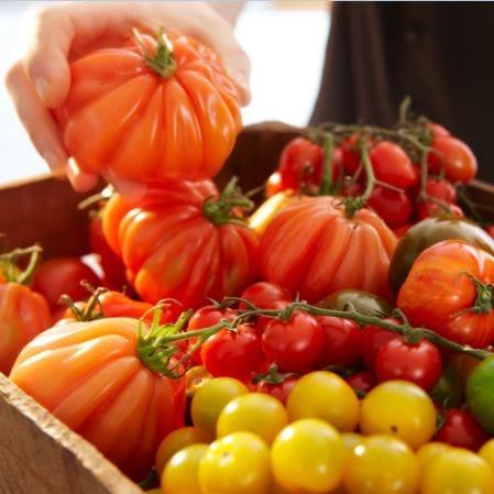 Tomate de diferite soiuri Moldova