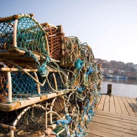 Peste de captura peste salbatic in plase peste oceanic