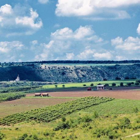 Moldova podgorii de struguri pentru vin