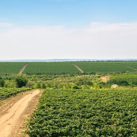 struguri pentru vinuri moldovenesti