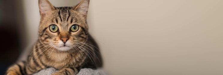 Сухі корма для котів
